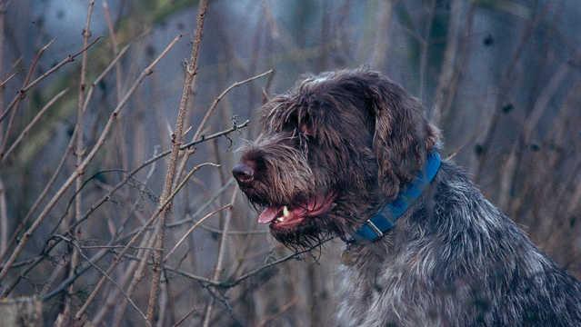 Strengere identificatieplicht bij honden